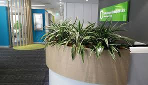 Interior office plants Luxurious Indoor Office Plants Living Creations Hire Indoor Office Plants Green Work Spaces Tropical Plant Rentals