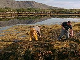 photo essay the beauty of nature pbs photo essay the beauty of
