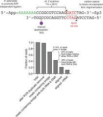 Venn Diagram Comparing Dna And Rna Chromatin Associated Rna Sequencing Char Seq Maps Genome