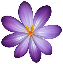 Image result for crocus clipart