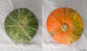 nutrition dl kabocha squash from small eats