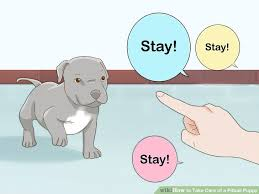 American Pitbull Terrier Feeding Chart 3 Ways To Take Care Of A Pitbull Puppy Wikihow