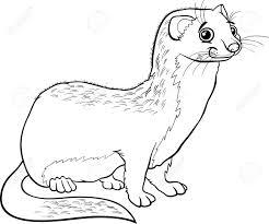 Weasel Animal Coloring Pages Courtoisiengcom