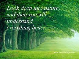 Beautiful Greenery Quotes Best of Nature Pictures Picture Nature Quotes