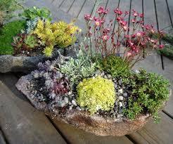 plants rock garden alpine garden