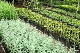 how to grow a herb garden. Growing Herb Garden Plants In Pots\u2013 It Isn\u0027t As Hard Seems How To Grow A