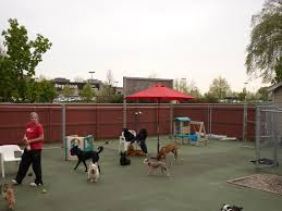 play area 4 outdoor small dog daycare almost 2 500 square feet of paved and fenced play allowing our smaller and shy dogs to playfully socialize without
