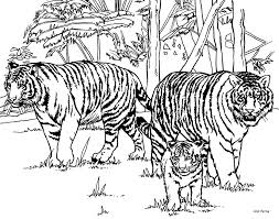 Small Picture Realistic Tiger Coloring Pages Realistic Coloring Pages Tiger