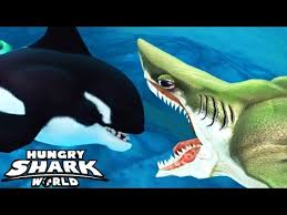 megalodon shark compared to killer whale. Beautiful Whale Hungry Shark World  Megalodon Vs Killer Whale And Compared To L