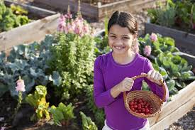 it s not too late vegetables you and your kids can plant right vegetable garden