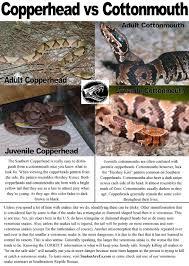 Georgia Snake Identification Chart Southeastern Reptile Rescue Identifyasnake