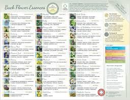 Small Bach Flower Essence Chart Laminated Poster Leaflet