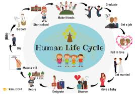 Human Life Cycle Useful Stages Of Life With Pictures 7 E S L