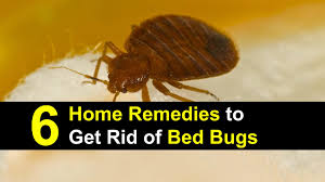 6 Home Remedies to Get Rid of Bed Bugs [Incl. Recipes]
