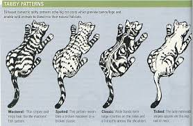 Tabby Patterns Beauteous Image Result For Ticked Pattern Tabby Cats Pinterest Tabby
