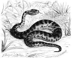 семейство гремучие или ямкоголовые змеи это что такое