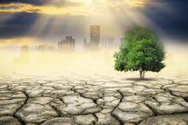 Plante modificate, încă o armă împotriva încălzirii globale