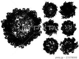 木 シルエット 真上からのイラスト素材 23378006 Pixta