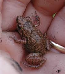 Image result for small frogs