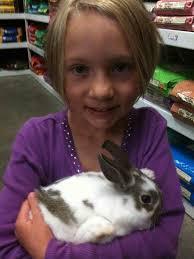 rabbits are good pets a persuasive essay eva varga rabbits are good pets a persuasive essay