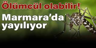 Marmara'da Asya Kaplan Sivrisineği istilası: Ölümcül hastalıkları  bulaştırıyor