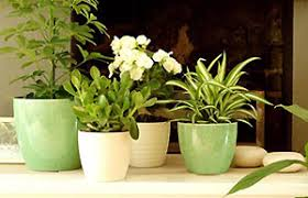 Image result for houseplants