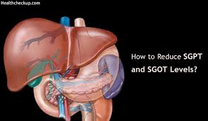 Normal Sgpt Level Chart How To Reduce Sgpt And Sgot Levels Methods Normal Range