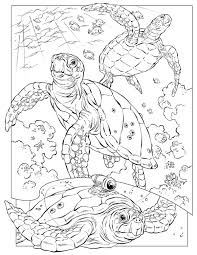 Small Picture Sea Turtle Documentary Crittercam Coloring Page Download Print