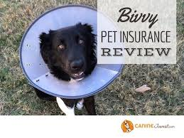 But, if you're comparing multiple phone: Bivvy Pet Insurance Review Low Pricing But Does It Cover Enough Pet Insurance Reviews Pet Medications Pet Insurance