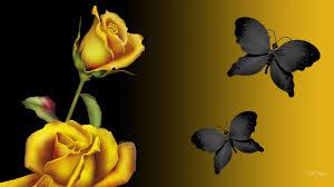 Golden Black HD desktop wallpaper ...