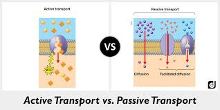 Endocytosis Vs Exocytosis Venn Diagram Difference Between Active Transport And Passive Transport