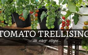 Hydroponics Farming In India Trusted Source For