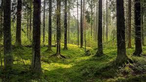 Environment Dark Forest Background Karelia Trees