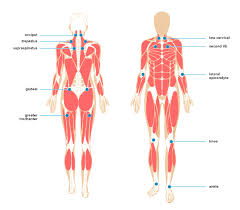 Fibromyalgia Tender Points Chart Myofascial Pain Treatment Symptoms Causes And More