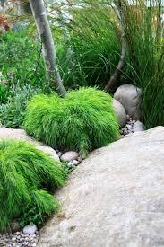 acacia cognata limelight in um black ball pot duplicated in garden bed