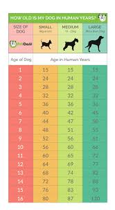 Dog Age Chart By Weight Dog Years Calculator Convert Dog Age To Human Years 2019