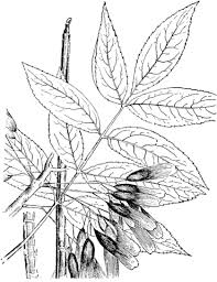 Small Picture Trees Leaves coloring pages Free Coloring Pages