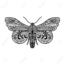 Hand Getrokken Magie Vlinder Voor Volwassen Anti Stress Kleurplaat