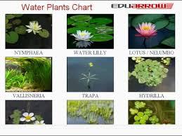 Water Plants Chart