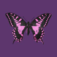 Pink And Black Butterfly