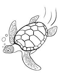 Small Picture sea life worksheets sea turtle activities animals learn