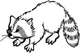 Small Picture Draw Raccoon Coloring Page 82 In Seasonal Colouring Pages with