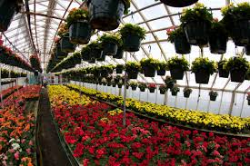 garden centers nj. Local Honey Neptune Nj Variety Growers 07753 Garden Centers In Flower Shops