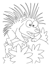 Small Picture Porcupine in attacking mood coloring pages Download Free