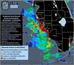 Red Tide Florida Toxic Algae Bloom Returns To Southwest Beaches