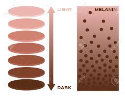 Skin Color And Melanin Index Infographic Vector 3 Chart