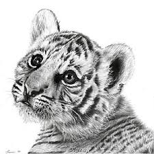 white tiger cubs drawing. Contemporary Drawing Tiger Cub Art Print By Thomaz Cauchi Inside White Cubs Drawing