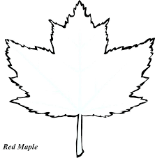 leaf template with lines maple leaf template sugar maple leaf sketch maple leaves coloring maple leaf