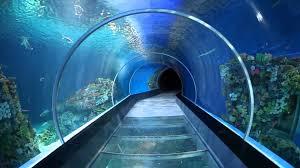 Resultado de imagen de aquarium barcelona