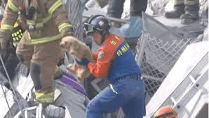 Reaction gifs say it with a gif! Dog Rescue Earthquake Gif Holidog Times En